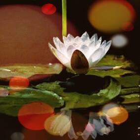 Lotus Pond_121414